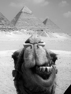 "Egypt and the Pyramids, and a camel of course!  ""Apparently he had a very good time!"""