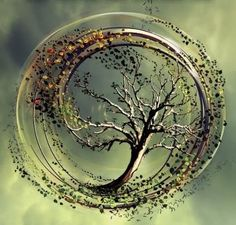 Verdict: Insurgent, the sequel to the bestselling first title in the YA series by Veronica Roth, Divergent, pulls no punches in picking up exactly where Tattoo Life, Tree Of Life Art, Tree Art, Tree Of Life Logo, Veronica Roth, Tantra, Belle Photo, Chakra, Artsy