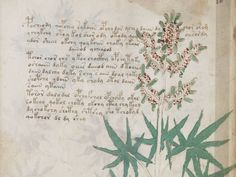 What is written in the Voynich Manuscript?This illustrated manuscript comes from the 15th century, but it is written in an unknown language. Ever since its discovery in 1912, scholars have been puzzled over its words and its strange images of plants and astronomical signs. In recent years one scholar believes he has partly deciphered some of the text, figuring out a handful of words.