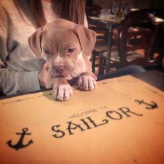 Un nuovo cliente molto affamato da Sailor!