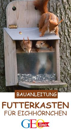 Eichhörnchen Futterkasten: Bauplan & Anleitung If you want to build a suitable squirrel feed box yourself, we have the right building instructions for you! Summer Decoration, Decoration Table, Squirrel Feeder, Bird Feeders, Squirrel Food, Diy Jardim, Ideas Hogar, Diy Garden Projects, Garden Crafts