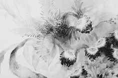 Black Flowers. Pencil, graphite powder on paper. 2013