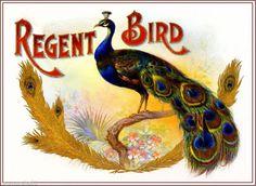 Teal Duck Bird Smoke Vintage Tobacciana Cigar Box Crate Inner Label Art Print