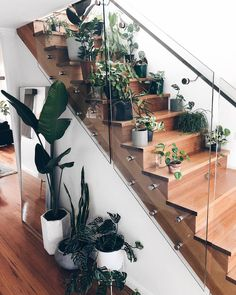 the only type of staircase I'll ever have! ✨ even if I have to squeeze past all the plants every time I want to go upstairs! I bet…