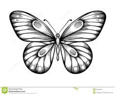 бабочка рисунок контур - Поиск в Google