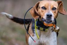 300+ Ideas For Choosing The Best Hunting Dog Names Hunting Dog Names, Dog Names Male, Hunting Cabin, Duck Hunting, Pet Names, Your Dog, Pets, Animals, Perfect Match
