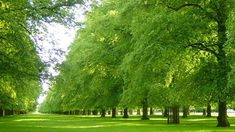 Bushy is the second largest Royal Park, with an area of 445 hectares (1,099 acres). Located to the north of Hampton Court Palace, it is home to around 320 free-roaming deer. Cycling is allowed on roads, and horse-riding permitted on rough grass.