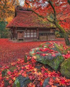 Nara, Wonderful Places, Beautiful Places, Voyager Loin, Autumn Scenes, Cabin In The Woods, Nature Adventure, Nature Photos, Land Scape
