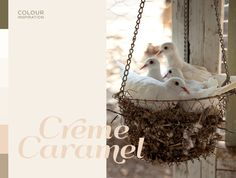 Colour Inspiration - Creme Caramel