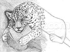 how to draw a jaguar step 9