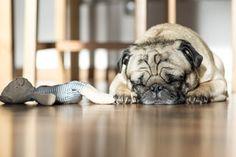 Ich bin ja ein bekennender Ikea Fan und benutze daher auch einige der Dinge für meine Hunde im Haus, Auto oder Hundetraining. Welche Sachen zu meinen absoluten Favoriten gehören, möchte ich euch gerne her zeigen :-)