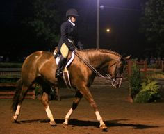 USEF: Time to Do Right By Our Horses | Rate My Horse PRO