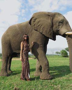 "5,209 curtidas, 46 comentários - Carol Chafauzer (@carolchafauzer) no Instagram: ""I'm in love with Africa! 🐘 Dress @us2store_ 🇿🇦 #southafrica #africa #safari #elephant #campjabulani…"""