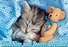 good night quotes and sayings | Good Night Cute Cat Animated Graphic Picture