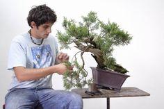 """Antonio Gesualdi, giovane artista cavese, nel 2008 fonda la """"scuola bonsai del mediterraneo"""" che diviene in poco tempo un punto di riferimento a livello locale per tutti coloro che spinti da passione,   #&nbsp #antonio #artista #bonsai #gesualdi #Mediterraneo #""""scuola"""