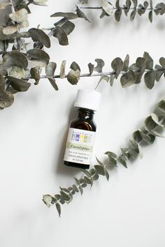 Here are the five best essential oils to have on hand and how to use them everyday. Get Rid Of Cold, Essential Oils For Colds, Chinese Herbs, Natural Cleaning Products, Natural Products, Eucalyptus Essential Oil, Drying Herbs, Natural Treatments, Natural Medicine