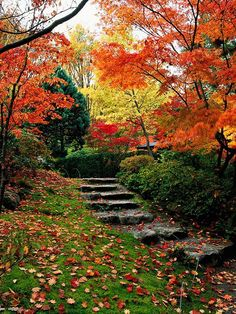 Steps into Fall...with landscaping ideas
