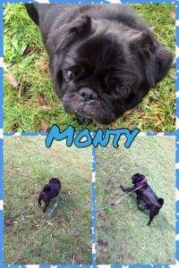 Monty. pet accomodation melbourne