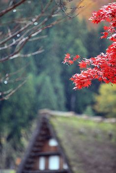 Autumn has come #1, Shirakawago, Japan Copyright: Takero Kawabata