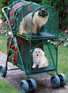 Double Decker Pet Carrier