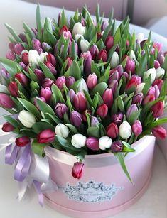 Tulips Flowers, Pretty Flowers, Fresh Flowers, Planting Flowers, Daffodils, Flower Box Gift, Flower Boxes, Blossom Flower, My Flower