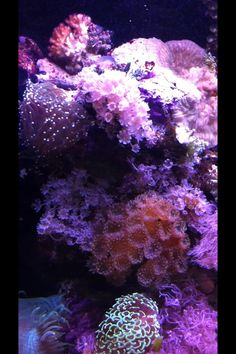 Reef tank-love these corals