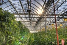 Lufa_Farms_Montreal_rooftop_greenhouse