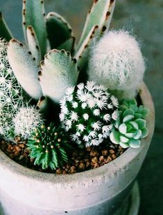 Cactus en We Heart …