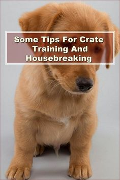 Since dogs cannot talk, you need to learn your dog's cues. If when meeting a new dog or person you find your dog is filled with dread, remove him from the situation. This could lead to the other dog or person getting bit. By reading the body language of your dog, you can ensure that this does not happen. Crate Training, Dog Training Tips, Pet Dogs, Dogs And Puppies, Pets, Dog Care Tips, Pet Care, Know It All, Body Language