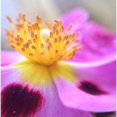 Petals.  #flowers #macro #beautiful #garden
