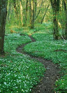 Sweden. I've walked paths like this in Sweden, and they are a marvel. The scenery is magnificent.