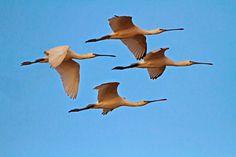 Birdingextremadura: Moving around