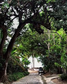 Morning walk in Sayulita street