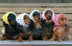There's just something about a dachshund <3
