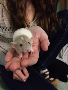 Rats are cute too - Imgur