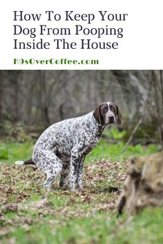 K9sOverCoffee.com   How To Keep Your Dog From Pooping Inside The House