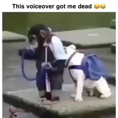 Crazy Funny Memes, Funny Video Memes, Really Funny Memes, Funny Relatable Memes, Haha Funny, Funny Cute, 9gag Funny, Funny Humor, Hilarious Stuff