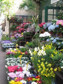 A Basket of Herbs: The Paris Flower Market
