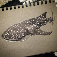 Can you count the spots? I lost track!  For my #DDSharkWeek #drawingOfTheDay it's the #whaleShark. I can't help but draw one of these #gentleGiant of #sharks. You might also say it's a homage to the #sculpture created by @stephenkesler_tusk at the #livingPlanetAquarium.  I used #pencilSketching #touchMarkers #Pitt pens and #gellyRoll on #tonedPaper. I'm no #Finbassador but I love creating #sharkArt for #discovery #sharkweek.  #sketchoftheday #sketch_dailies #mostwonderfulweek #dailydoodle…