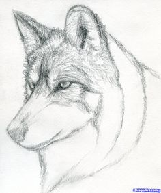how to draw a wolf head, mexican wolf step 5