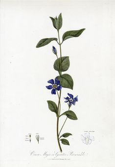 Robert Thornton Botanical Extracts 1810
