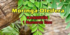 Bu Bitkinin Yaprakları yüzyıllar boyunca geleneksel tıbbın bir parçası olarak kullanıldı... Moringa Oleifera, adını çok fazla duymadığınız ancak birçok kültürde kullanılan ve dünyanın en faydalı bitkisi olarak kabul edilen bir ağaçtır. Moringa, önemli mineraller içerir ve ayrıca protein, vitamin, beta-karoten, amino