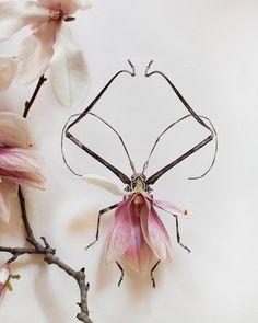 """Karen Herer...""""Fauna Meets Flora"""" Orchids with line art"""