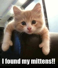 I Found My Mittens!! Kitten Meme