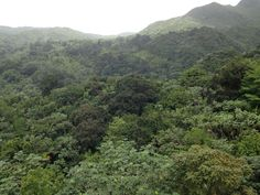 The only rainforest in the whole of the USA: EL Yunque