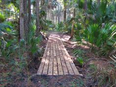 Traveling through dense forests of pine and palmetto, here& a guide to Central Florida& best section hikes on the Florida Trail. Hiking In Florida, Florida Keys Camping, Florida Trail, Bodega Bay Camping, South Florida, Florida Water, Central Florida, Camping And Hiking, Outdoor Camping