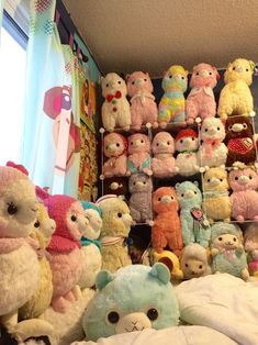 obsession with alpacas
