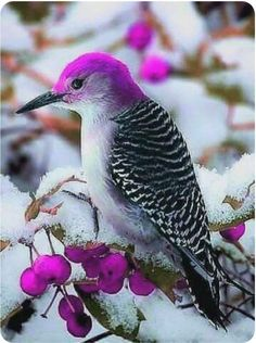 A purple-headed woodpecker. Such a rare and beautiful creature. - My list of the most beautiful animals Rare Birds, Exotic Birds, Colorful Birds, Exotic Pets, Exotic Fish, Most Beautiful Birds, Pretty Birds, Beautiful Beautiful, Bird Pictures