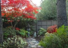 Magnificent Coral Japanese Maple convention San Francisco Asian Landscape Remodeling ideas with Asian garden art Japanese maple path pavers red leaves river pebbles walkway wood fencing Asian Garden, Japanese Garden Plants, Japanese Garden Design, Japanese Gardens, Japanese Fence, Japanese Art, Asian Landscape, Green Landscape, Landscape Design