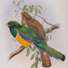 In celebration of here's a sneaky peek of some of the pages from the Exotic Bird book that will be on display in The Portland Collection from 31 March 31 March, Bird Book, Portland, Exotic, Celebration, Display, Gallery, World, Instagram Posts